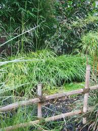 Bamboogarden1